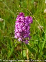 Orchideenwiese 4