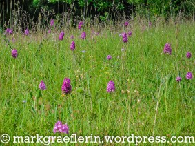Orchideenwiese 6