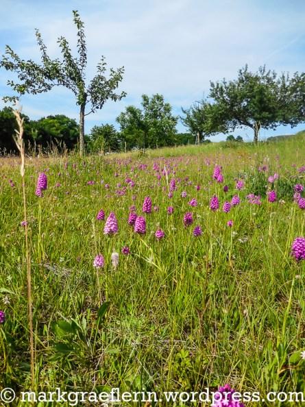 Orchideenwiese 8