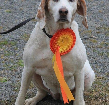 Berta's first dog show