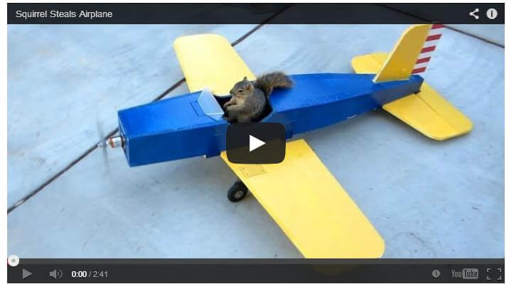 A squirrel steals a model plane