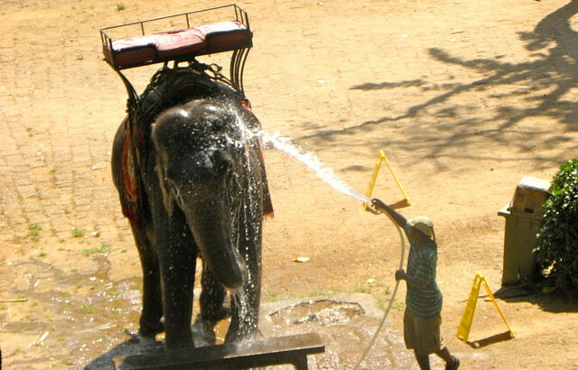 An elephant wash