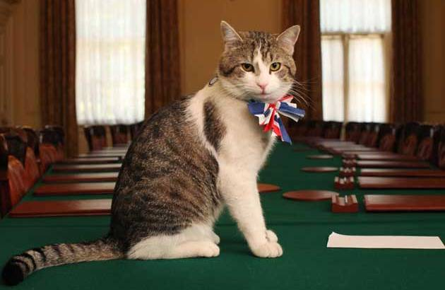 Larry the Chief Mouser to the Cabinet Office