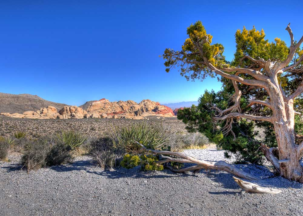 Red Rock Canyon 4