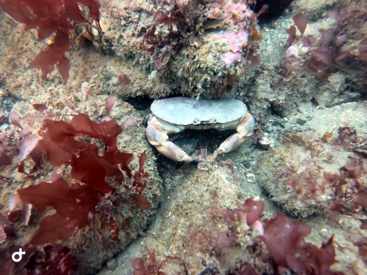Research Diver Course Crab