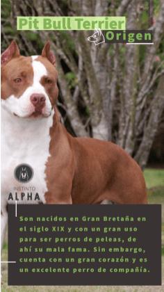 Pit bull Su Origen 2 Campaña Instagram Instinto Alpha