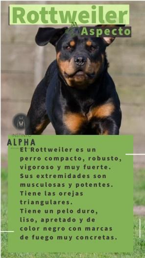 Rottweiler El Aspecto