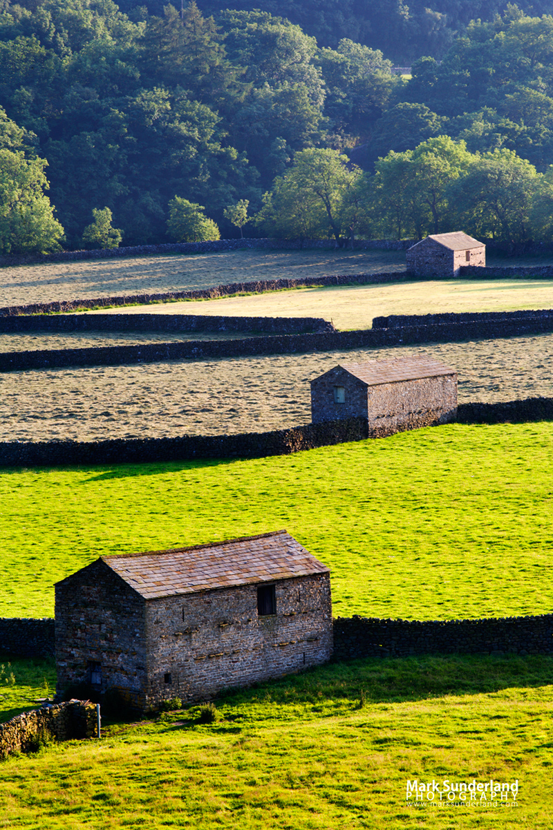 Field Barns at Gunnerside, Swaledale, Yorkshire Dales