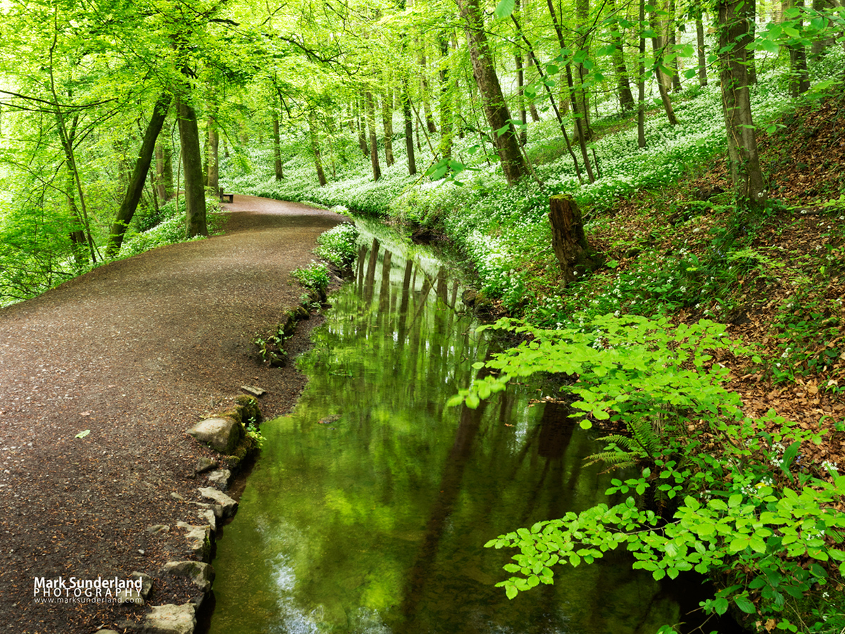 Skipton Castle Woods in Spring, Skipton, North Yorkshire