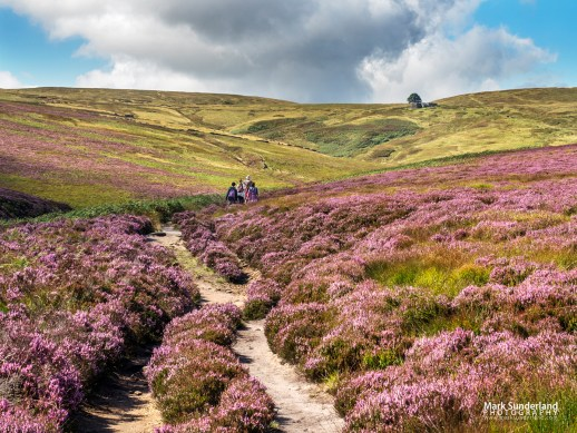 The Bronte Way on Haworth Moor, Yorkshire