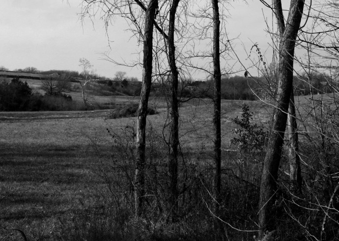 Trees and field, December 2014, b&w