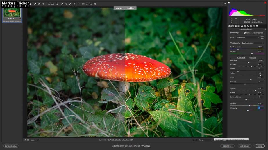 Der Fliegenpilz (Amanita muscaria) Adobe Photoshop Camera RAW Vorher Nacher