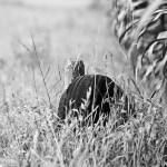 Flora Fauna Landscape Street Travel Photography Portfolio