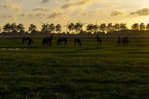 Pferdeweide im Sonnenuntergang
