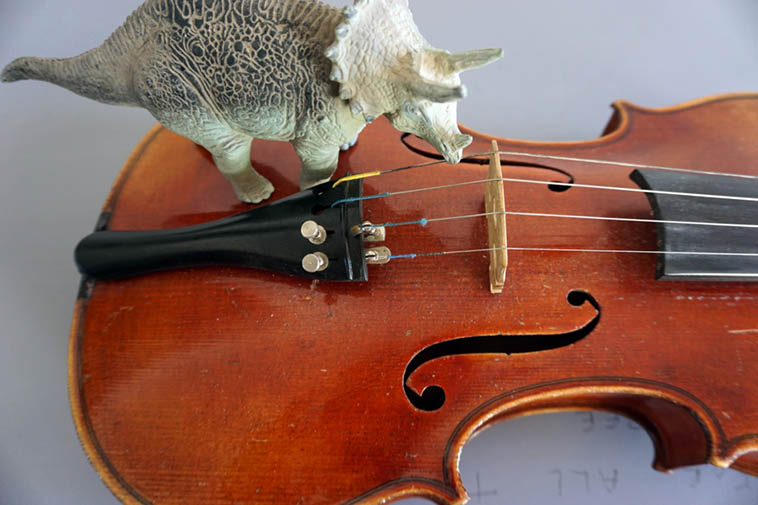 Triceratops & violin – photo by Mark Weber – 14july2o18