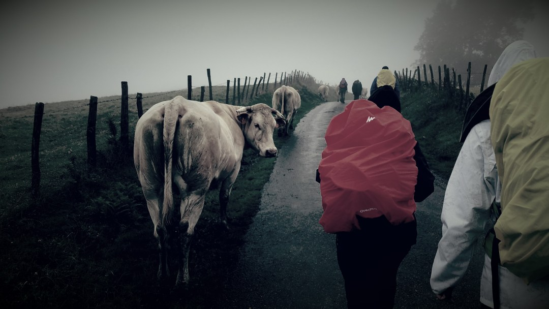 Day 1- Into the Pyrenees- Who says cows cant be pilgrims too?