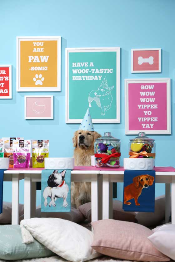 How to throw your dog a pawsome birthday party with Evite! #ad #paidpromotion #Evite