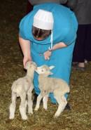 Enjoying the Lambs