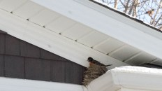 Safe on My Nest