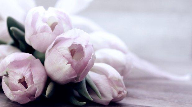Tulips Tulipa Flowers Schnittblume