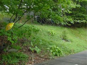 garden in 2001