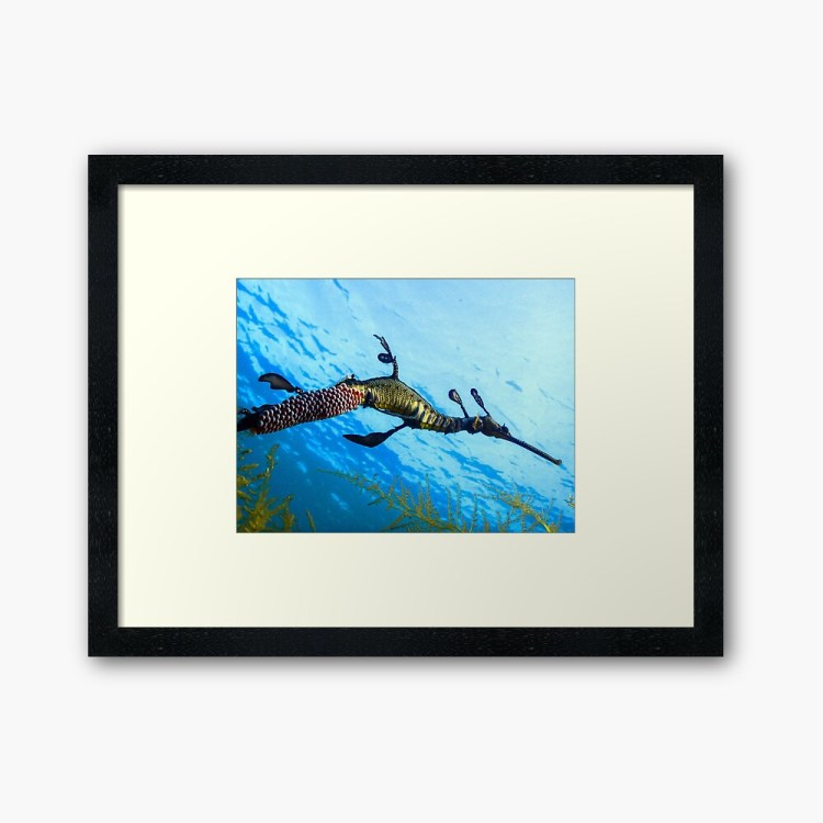 Framed Art Print Weedy Seadragon by Marlon Quinn