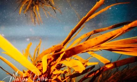 Swim Wild Into the Eternal Gardens: Exploring the Bass Strait Coast