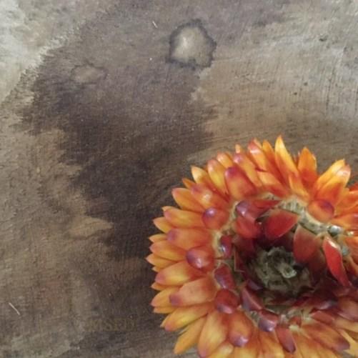 Straw Flowers 2