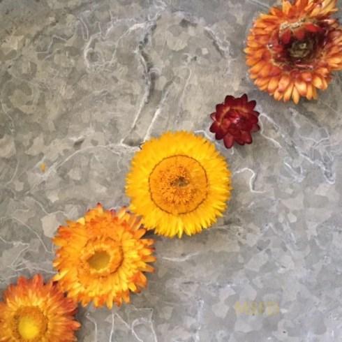 Straw Flowers 3