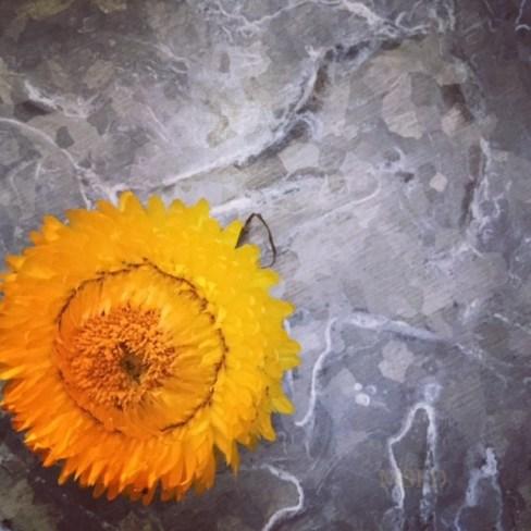Straw Flowers 4