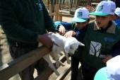 Görme engelli minikler, hayvanları dokunarak tanıdı