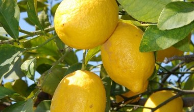 Nisan ayının zam şampiyonu Limon oldu