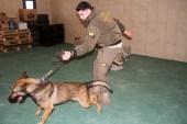 (Özel) İstanbul Havalimanı'nda apron güvenliği özel köpeklere emanet