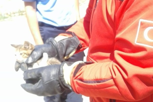 Aracın motoruna giren kedi yavrusunu itfaiye kurtardı