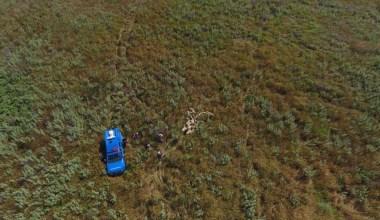 Kayıp koyunları jandarma drone ile buldu