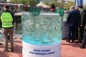 İzmit Körfezi Balıklandırma Projesi
