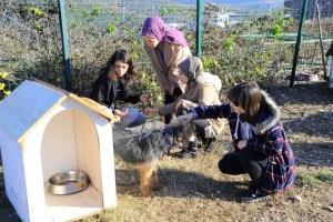 Büyükşehir'den sokak hayvanlarına sıcak yuva desteği