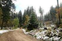 A dirt road through a forest in autumn