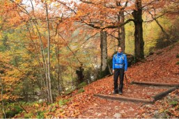 A hiker in an autumn forest