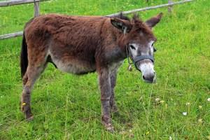 donkey-368989_1920