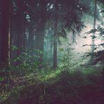 Ecosia, czyli najbardziej ekologiczna wyszukiwarka!