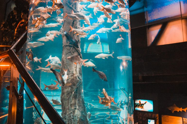 oceanarium Kuala Lumpur