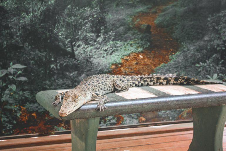crocodile langkawi