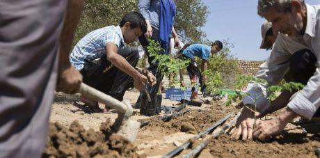 des-acacias-en-tunisie-708x350