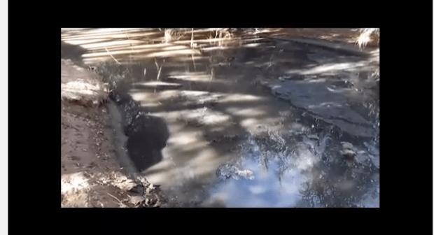 فيديو: رسالة إلى القمة البيئية 22 بمراكش من تنغير