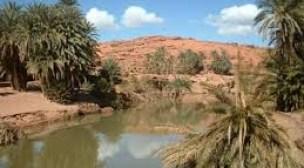 """""""إكران أنموكار"""" أول معرض إيكولوجي مبني بسعف النخيل بالمغرب (بلاغ صحفي)"""