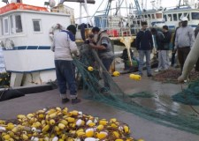 كل ما يجب أن تعرفه عن أسباب ارتفاع السمك في الأسواق المغربية