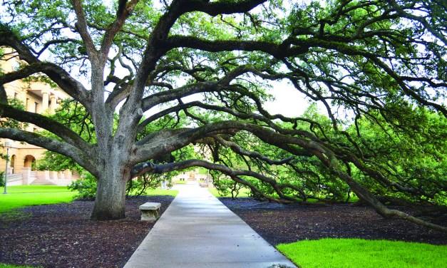 CENTURY TREE ENDOWMENT: THE LEGACY OF ACORNS