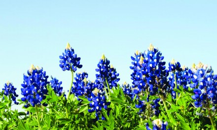 Experience Spring in Bryan/College Station