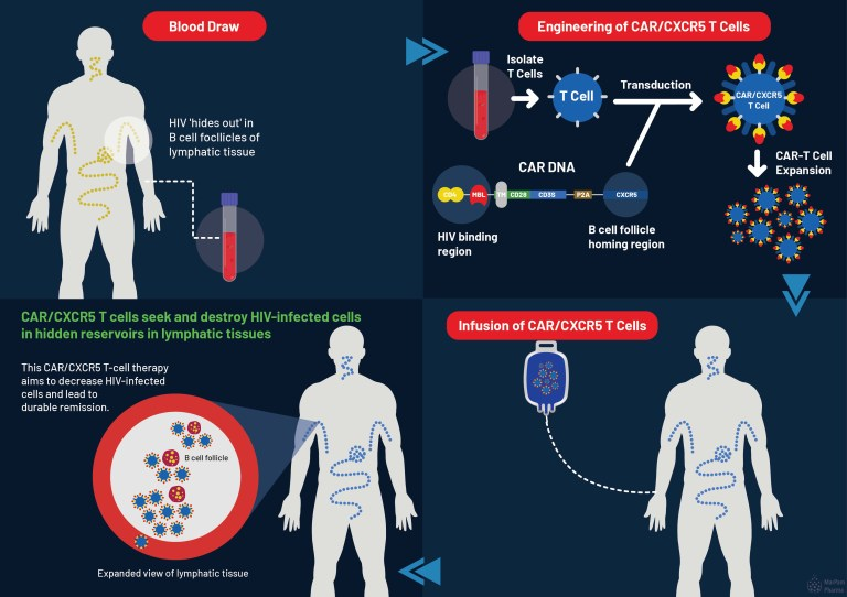 CAR/CXCR5 T Cell Therapy Infographic